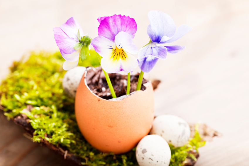 flowers, eggs and moss