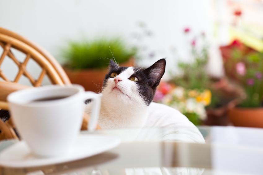 cafedeschats
