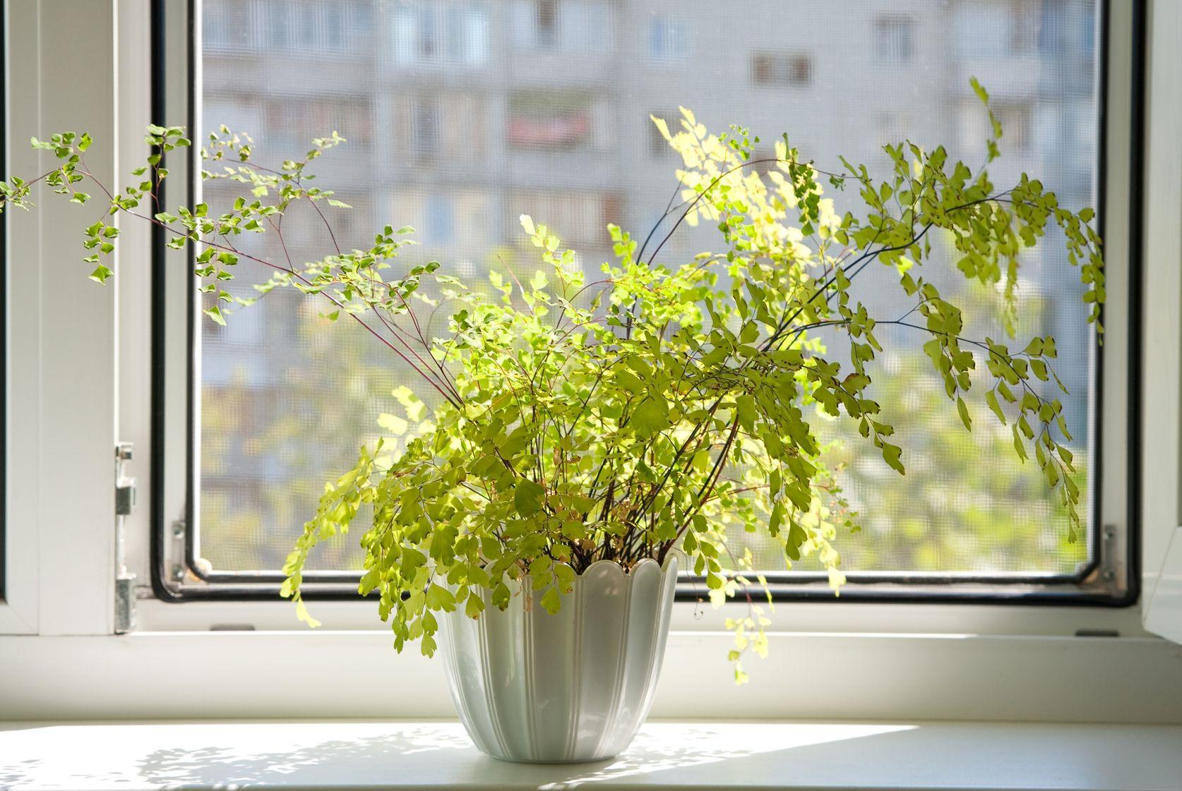 Цветы комнатные на окне