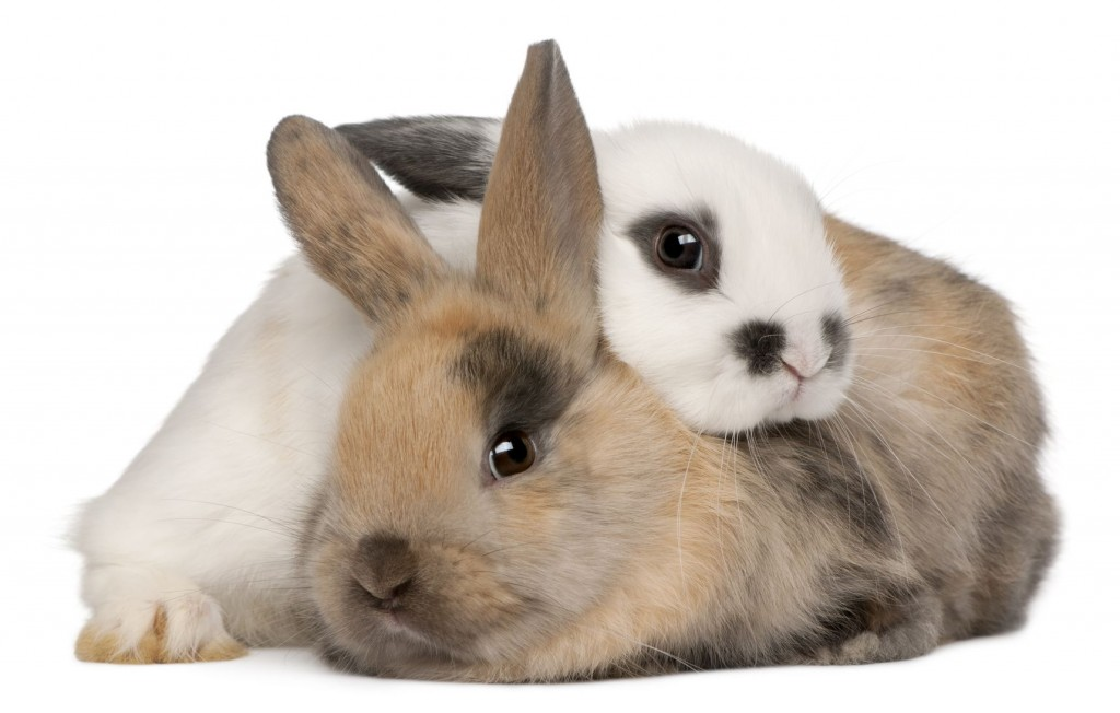 snuggling bunnies. need we say more?