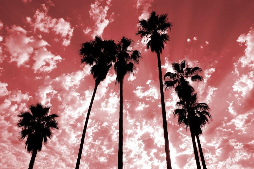 palmtrees2