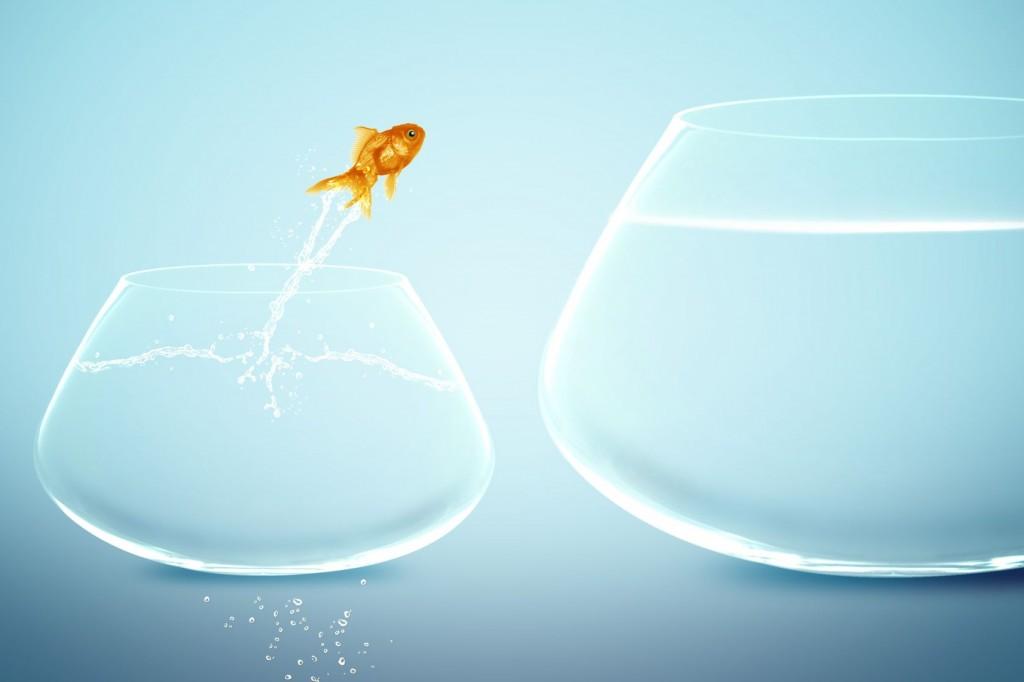 freegoldfish