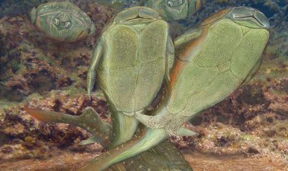 Microbrachius-mating-524728
