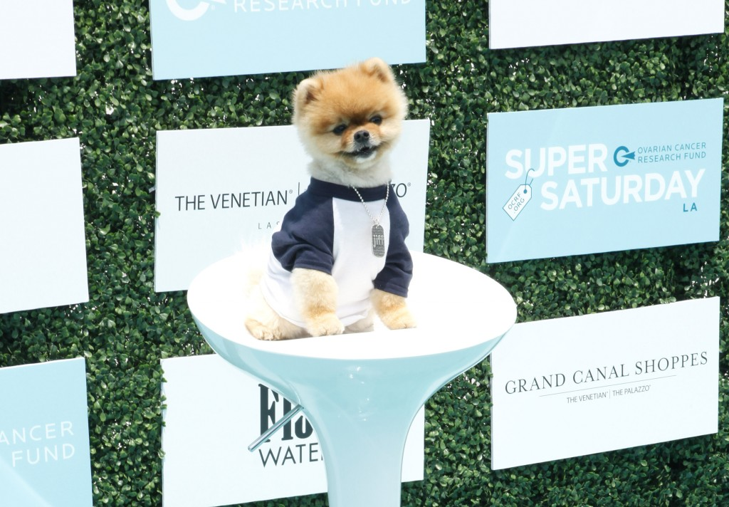 Jiff The Pom arrives to the 2nd Annual Super Saturday LA hosted by Ovarian Cancer Research Fund at the Barker Hanger, Santa Monica CA.