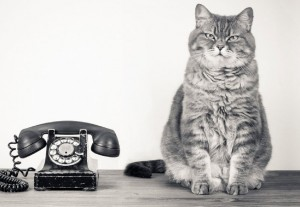cat with telephone