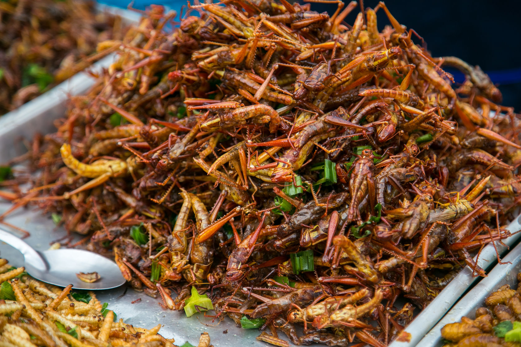 50092582 - fried grasshoppers at bangkok , thailand